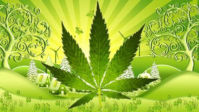 solar marijuana